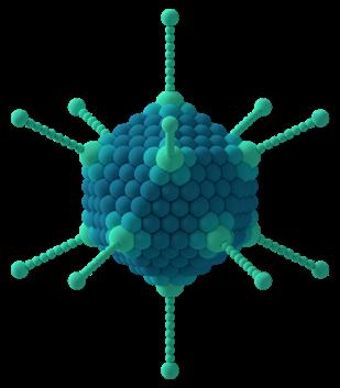 Os adenovírus são um grupo de vírus de DNA e são responsáveis, além da conjuntivite, por doenças relacionadas ao sistema respiratório, como o resfriado.