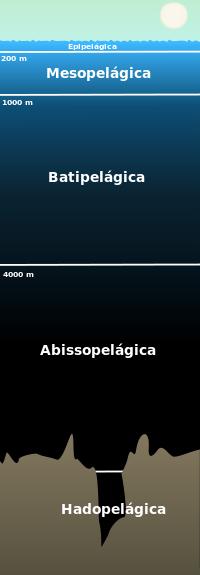 Divisão das zonas do Talassociclo.