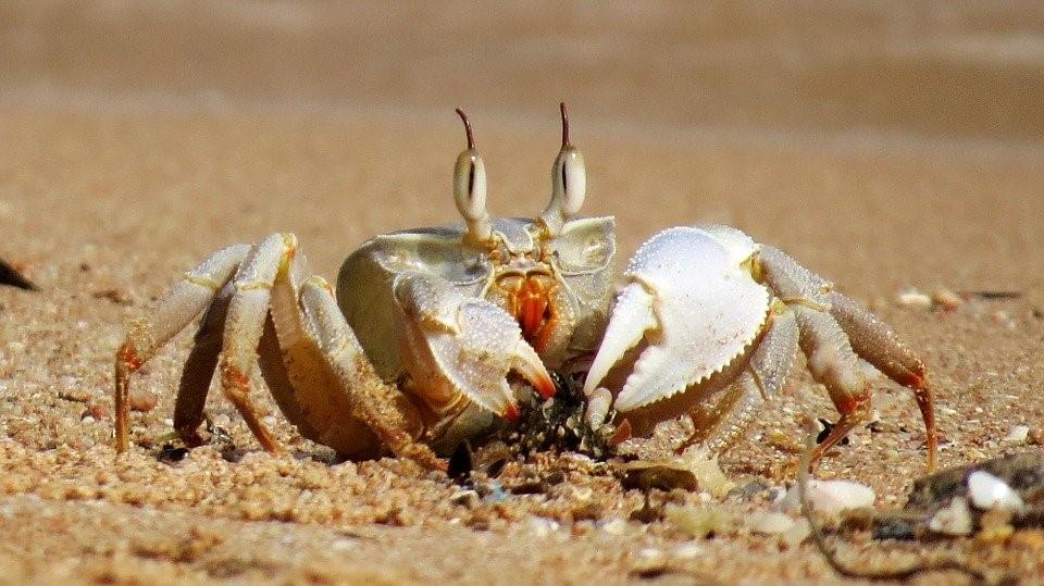 Os caranguejos são um exemplo de crustáceos.