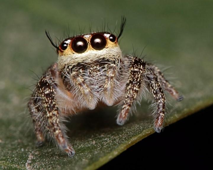 As aranhas são as mais conhecidas dentre os aracnídeos.