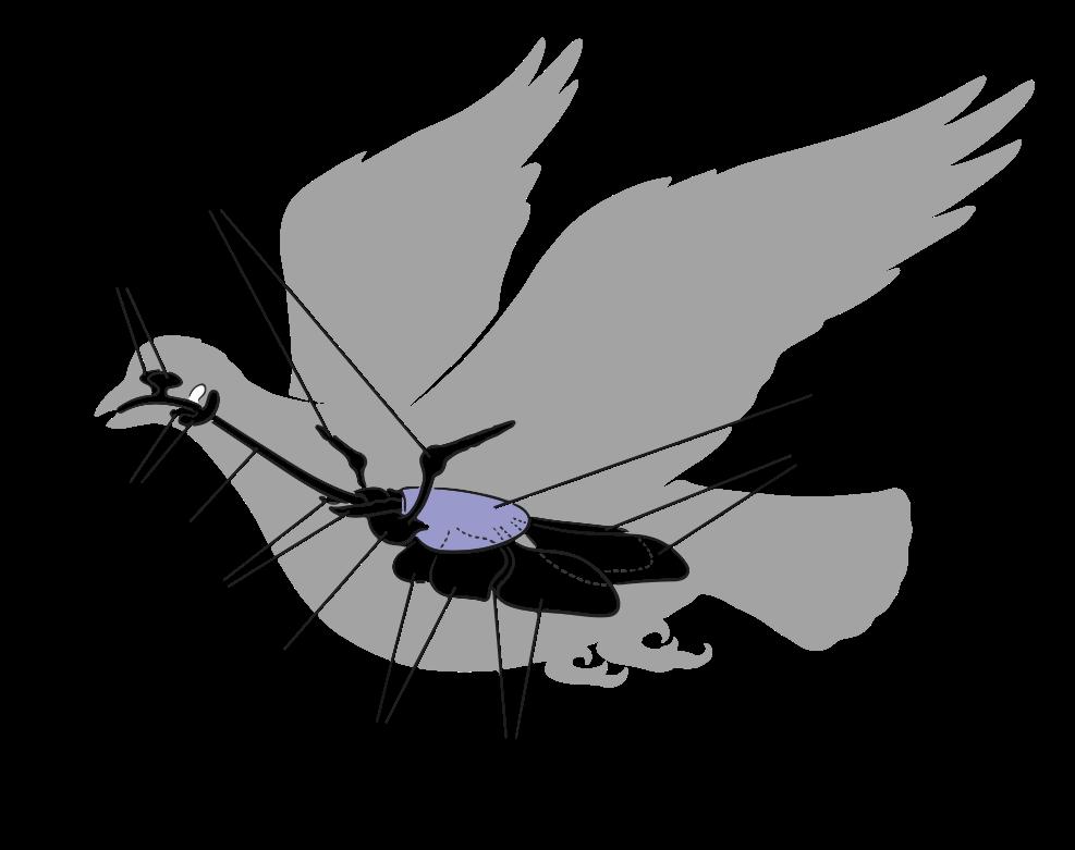 Anatomia interna de uma ave, com destaque para o sistema respiratório, sacos aéreos e suas expansões.