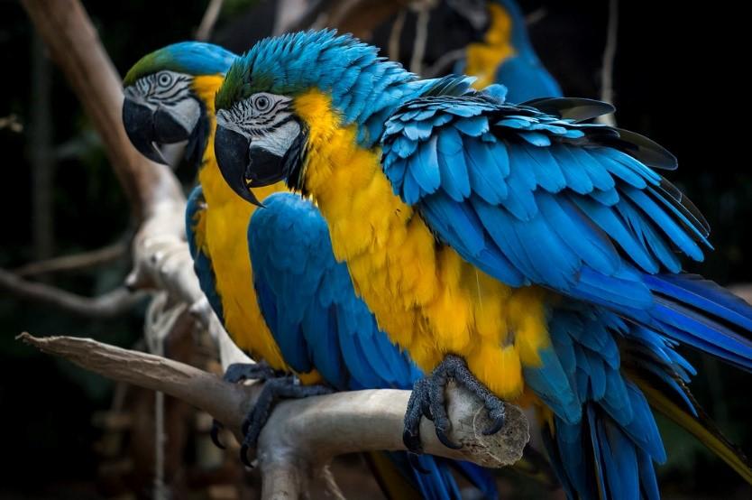 As aves apresentam uma grande diversidade de formas de bico e cores de penas, muitas vezes havendo diferença de cores entre machos e fêmeas.