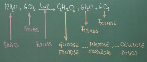 Produtos da fotossíntese