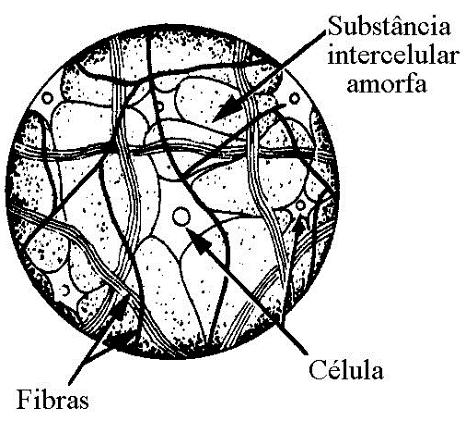 Características do tecido conjuntivo