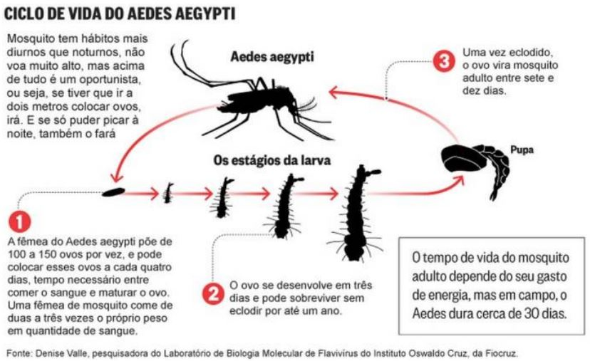 Informações sobre o mosquito Aedes aegypti