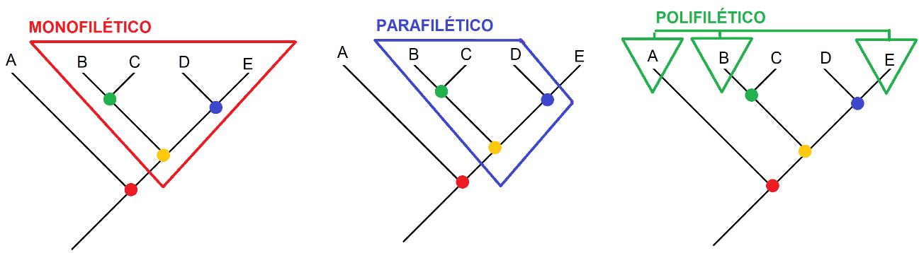 Imagem mostrando um cladograma monofilático, parafilético e polifilético