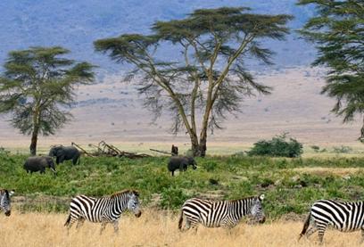 Grande savana africana e seus animais de grande porte