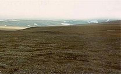 Tundra - vegetação rasteira